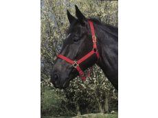 Licol double épaisseur rouge pour cheval