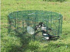 Cage à pie ronde à 5 compartiments - BOXTRAP