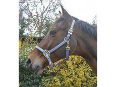 Licol polyfun bleu EQUITHEME pour poney