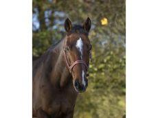 Licol polyfun bordeaux EQUITHEME pour poney