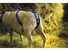 Bandage prolapsus en nylon avec pessaire pour ovin