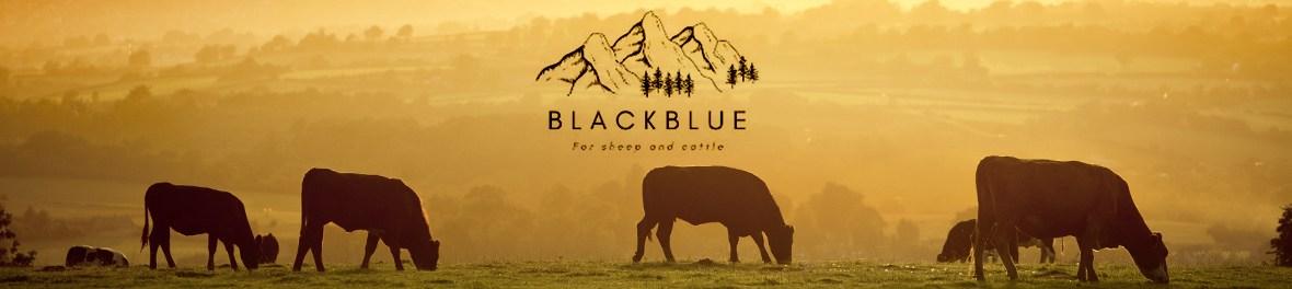 BlackBlue, rénettes, cloches, bovins